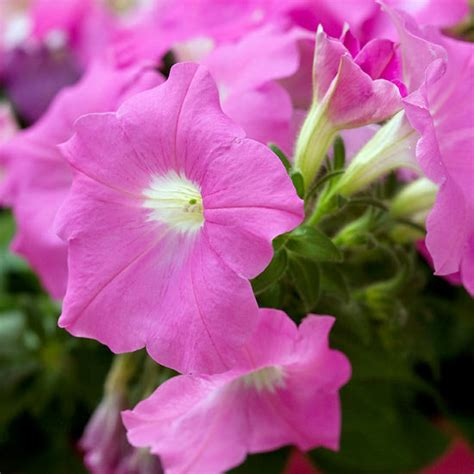 popular flowers for gardens the most beautiful pink flowers in the garden grow