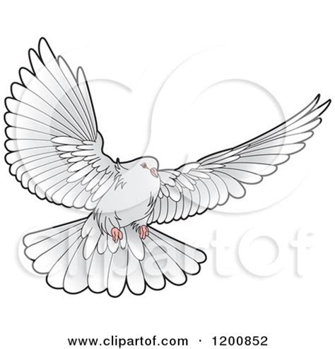 clipart of a grey dove flying royalty free vector