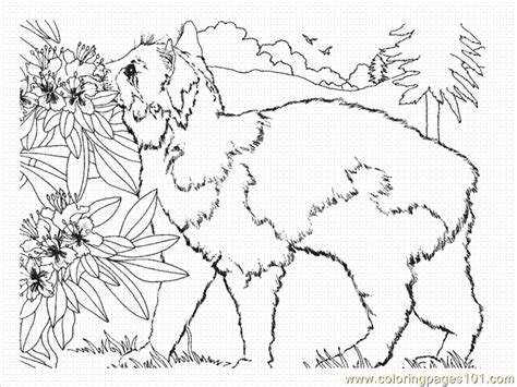 calico cat coloring sheets coloring pages