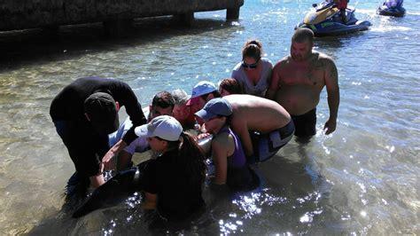 boat crash ta ciudadan 237 a y agencias salvan dos ballenas varadas en playa