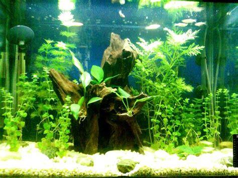 Tropical Plants For Aquarium - tropical fish tanks page 8