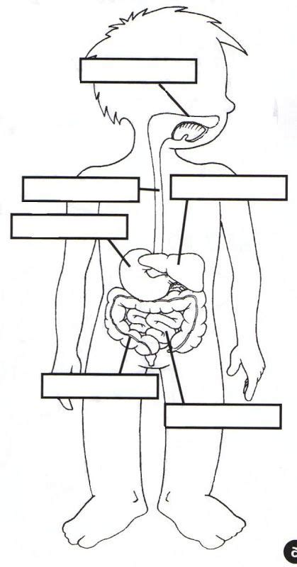 imagenes y simbolos que usamos para referirnos a la iglesia 17 mejores ideas sobre sistema digestivo en pinterest