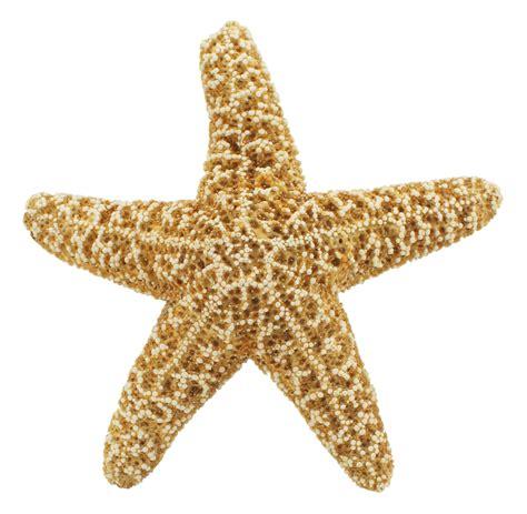 starfish images starfish png transparent image pngpix