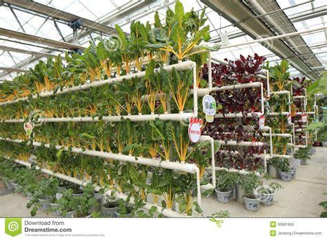 cultivation  vegetables vector illustration
