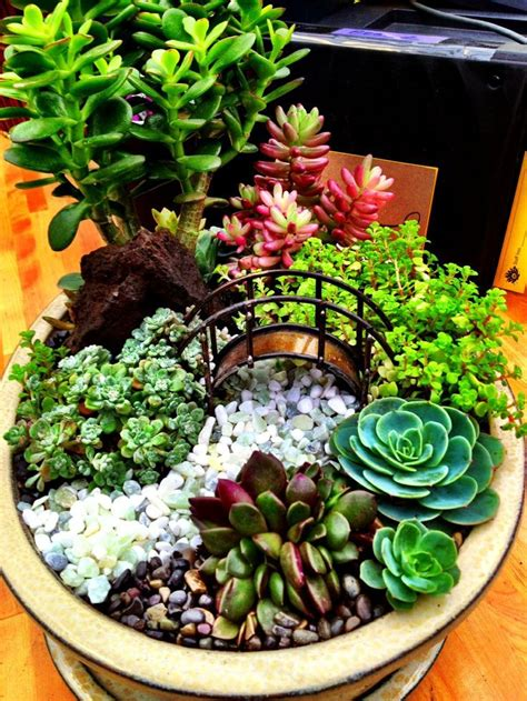 Garden Using Dishes 25 Best Ideas About Dish Garden On Terrarium