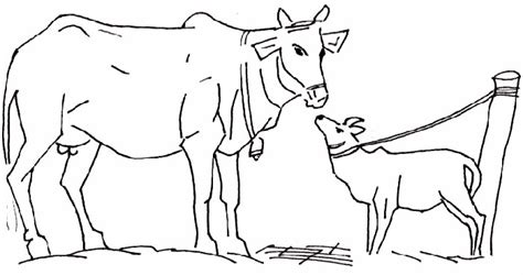 coloring pages of cow and calf free cow coloring pages printable
