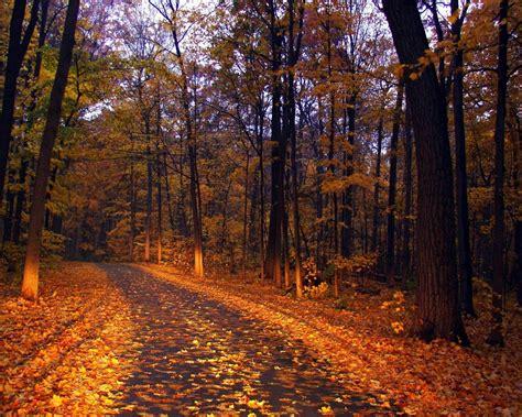 imagenes de otoño en mendoza paisajes del oto 241 o
