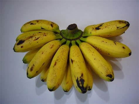 tiny banana name mini bananas farang fables