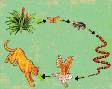 cadena alimenticia serpiente ecosistemas y tu