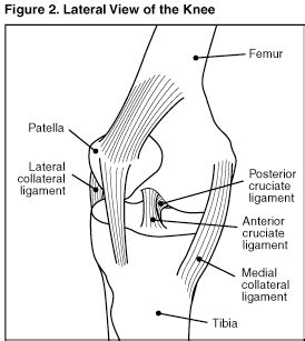 parts of knee diagram strains and sprains signs symptoms diagnosis and