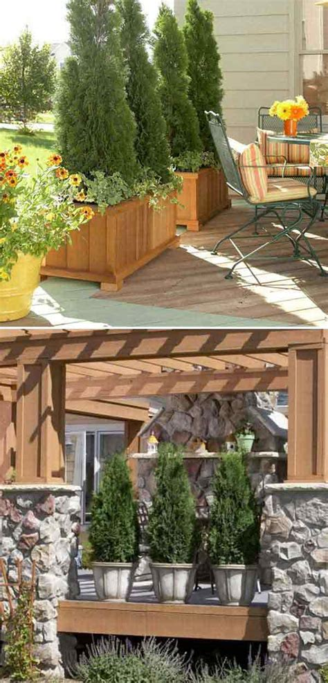 Landscape Ideas To Block Neighbors View Add Privacy To Your Garden Or Yard With Plants Amazing