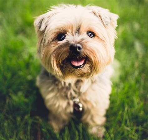 great names for dogs names for puppy dogs 4k wallpapers