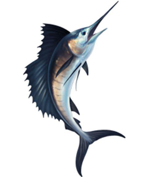 sailfish clipart vector genius