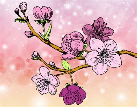 imagenes flores de cerezo dibujo de rama de cerezo pintado por en dibujos net el d 237 a