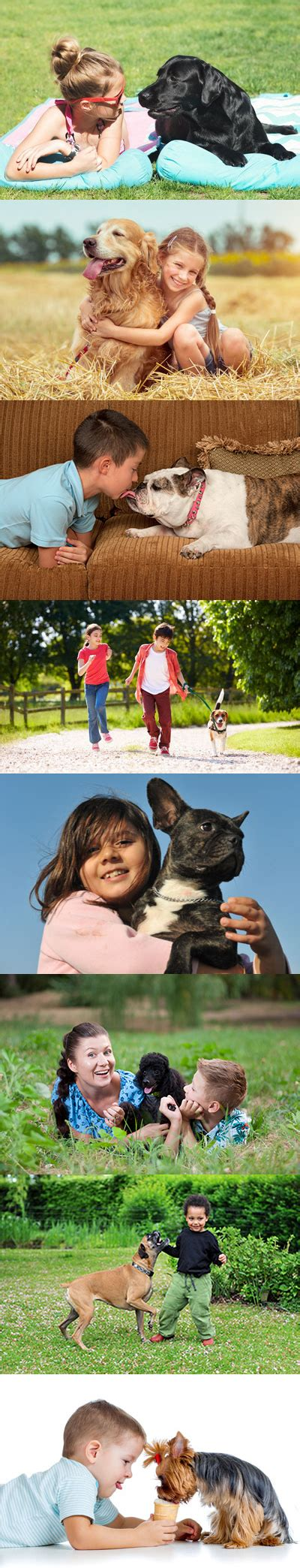 family friendly dogs family friendly breeds animal behavior college