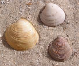 And Shell Shell