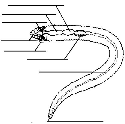 earthworm dissection labeled diagram labeled car dashboard diagram labeled free engine image for user manual