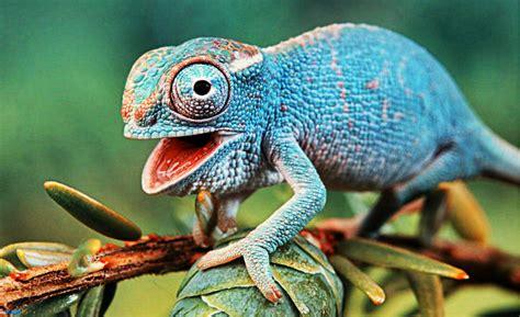 imagenes ojos de reptiles definici 243 n de reptil que es conceptos y significados
