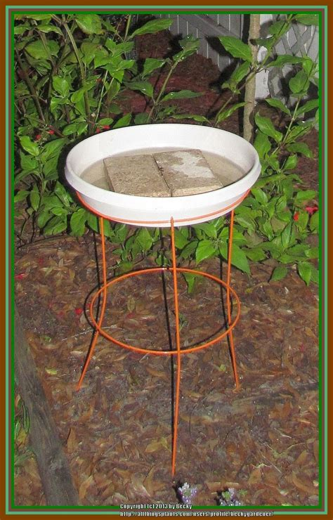 Homemade Bird Bath   Garden.org