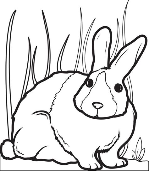 bunny rabbit coloring pages activities free printable bunny rabbit coloring page for kids 2
