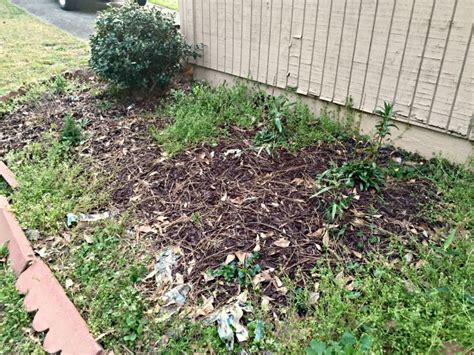 top 28 mulch prevent weeds what is the best mulch to prevent weeds countryside network