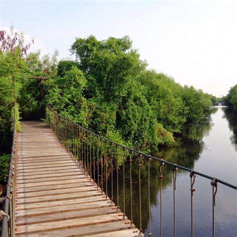 jalan jalan  wisata hutan mangrove angke pik