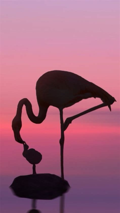 flamingo heaven wallpaper 1000 images about flamingo row on pinterest caribbean