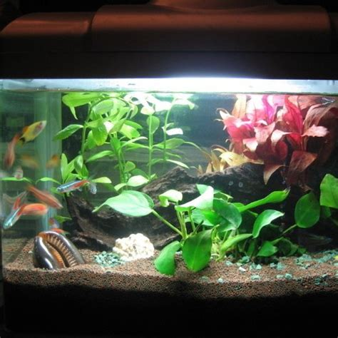 fish lights amzdeal 174 led fish lights underwater lighting tank aquarium