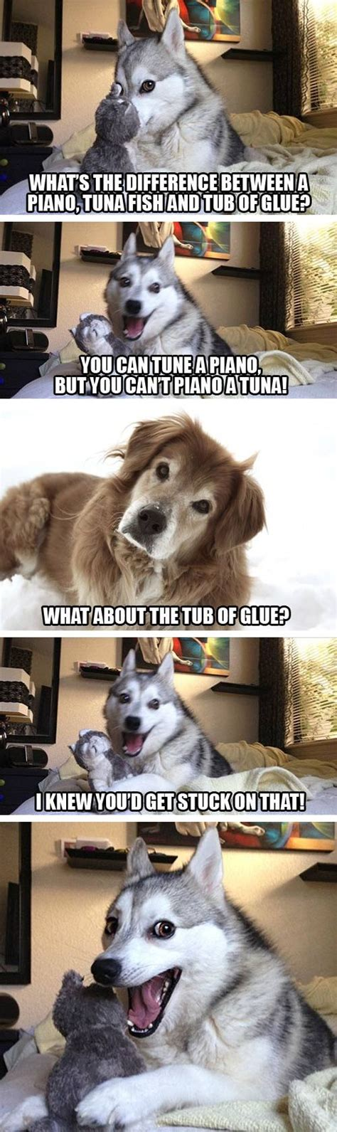 T Dog Meme - 39 best images about husky memes on pinterest dog names