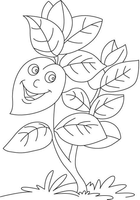 herb coloring pages coloring pages
