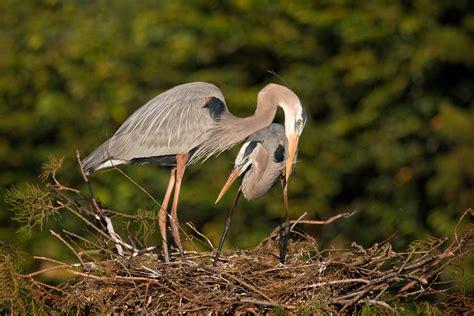 wakodahatchee wetlands matthew paulson photography