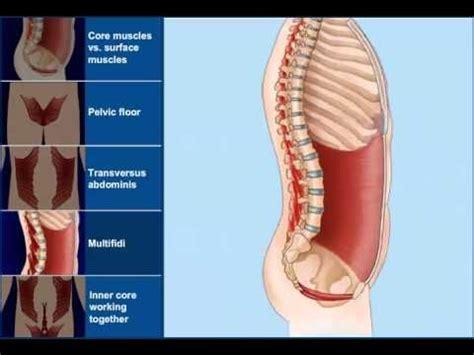 animation   transverse abdominis