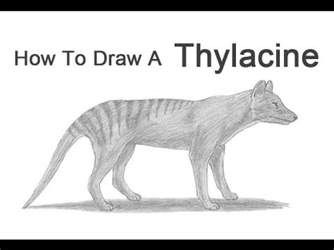 How To Draw Tasmania
