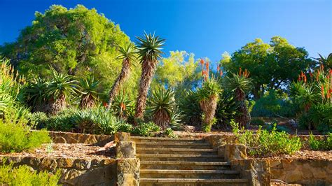 Botanical Garden Perth Park And Botanic Garden In Perth Western Australia Expedia