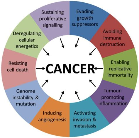 cancers free full text mechanisms of nuclear export in