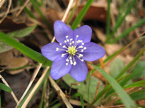 nomi fiori invernali fiori liguri invernali segnalazione fiori e piante