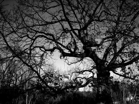 wallpaper black and white trees tree black and white background wallpapers 4247 amazing