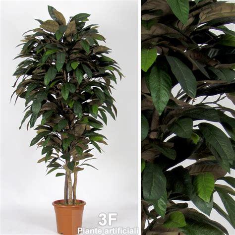 magnolia in vaso magnolia medium altezza cm 125 216 vaso cm 18 3f