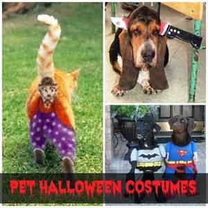 funniest halloween couple costumes funny pet halloween costumes scrappy geek