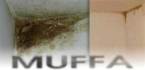 muffa soffitto muffa umidit 224 e condensa tutto il mondo cartongesso