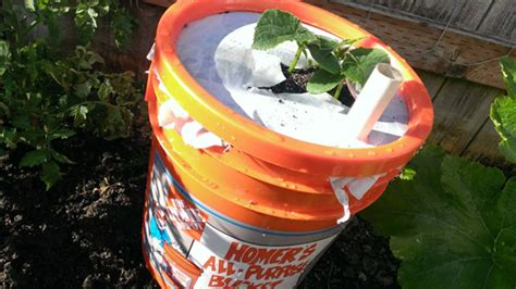 how to make a self watering planter with a 5 gallon
