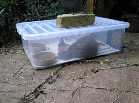 buy hedgehog house best 25 hedgehog house ideas on pinterest diy hedgehog