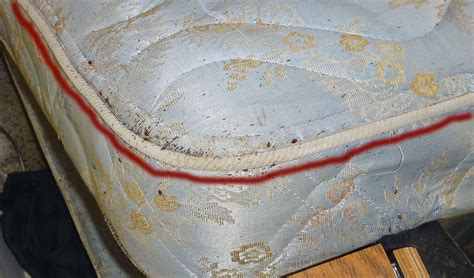 bed bugs mattress real life bed bugs infestations pictures 2 pest control