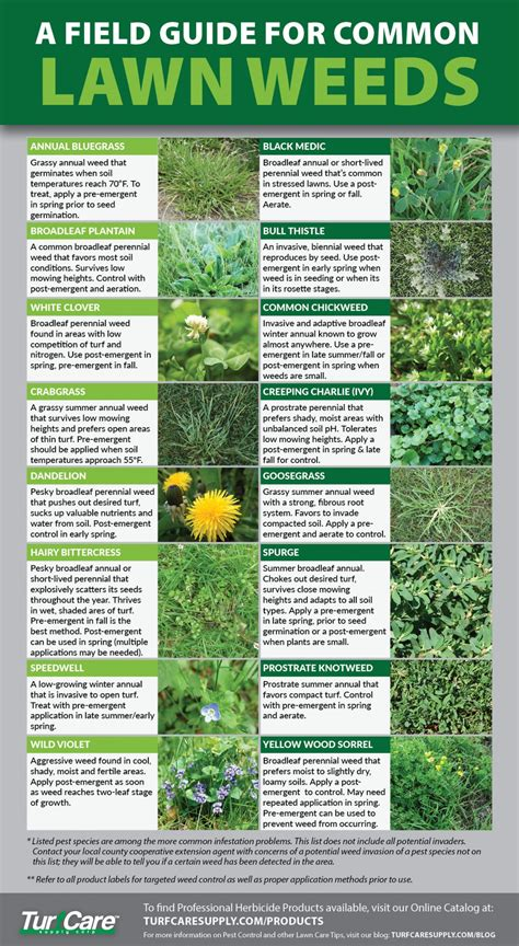 field guide  common lawn weeds turf care supply