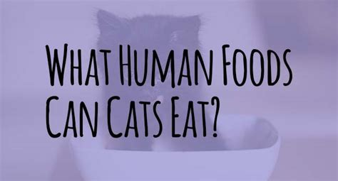 can humans eat food humans cat food images