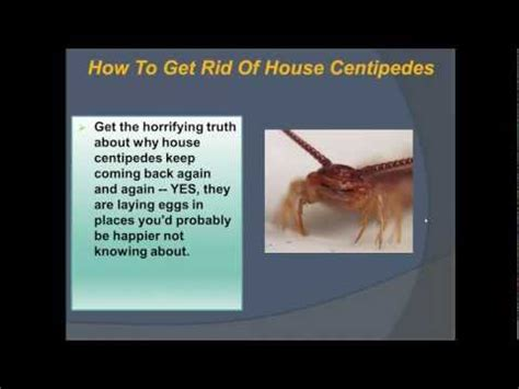 how to get rid of mosquitoes in my backyard how do i get rid of mosquitoes in my yard how to save