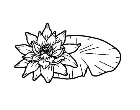 fior di loto disegno disegno di una fiore di loto da colorare acolore