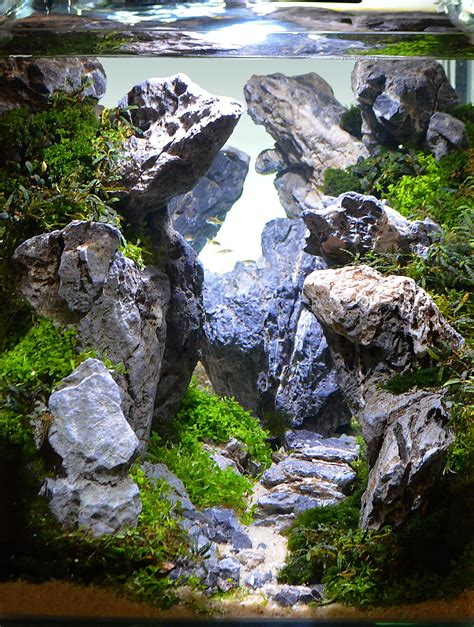 japanese aquascape artist 100 japanese aquascape on the edge by piotr kwiatkowski aquascape awards