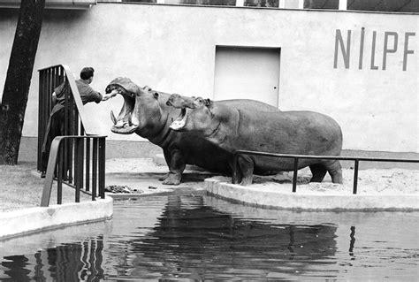 zoologischer garten berlin krokodile leesfragment oorlogszone zoo tracesofwar nl