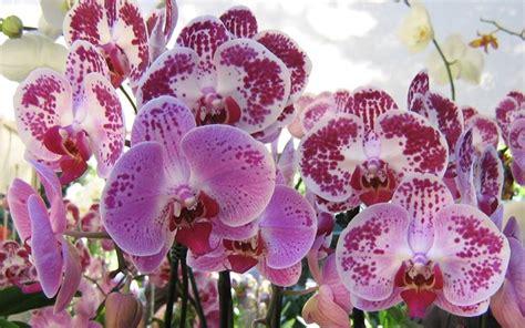 fiori di orchidee orchidea fiori fiori delle piante